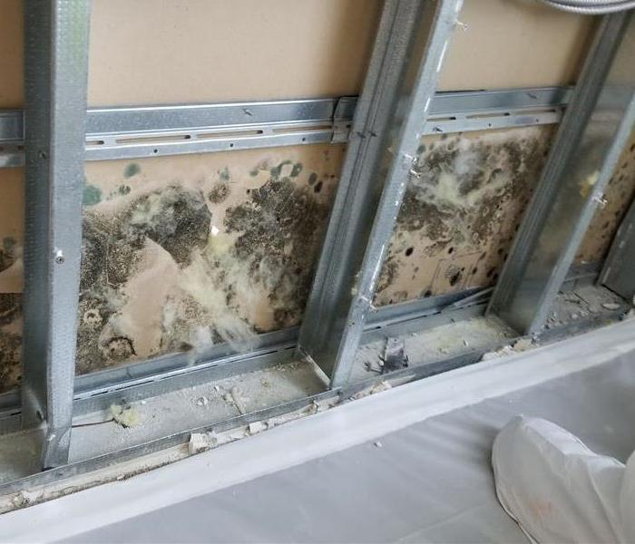 Mold Remediation Simi Valley Residents:  Follow These Mold Safety Tips If You Suspect Mold